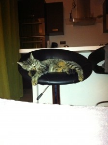 chat-fauteuil