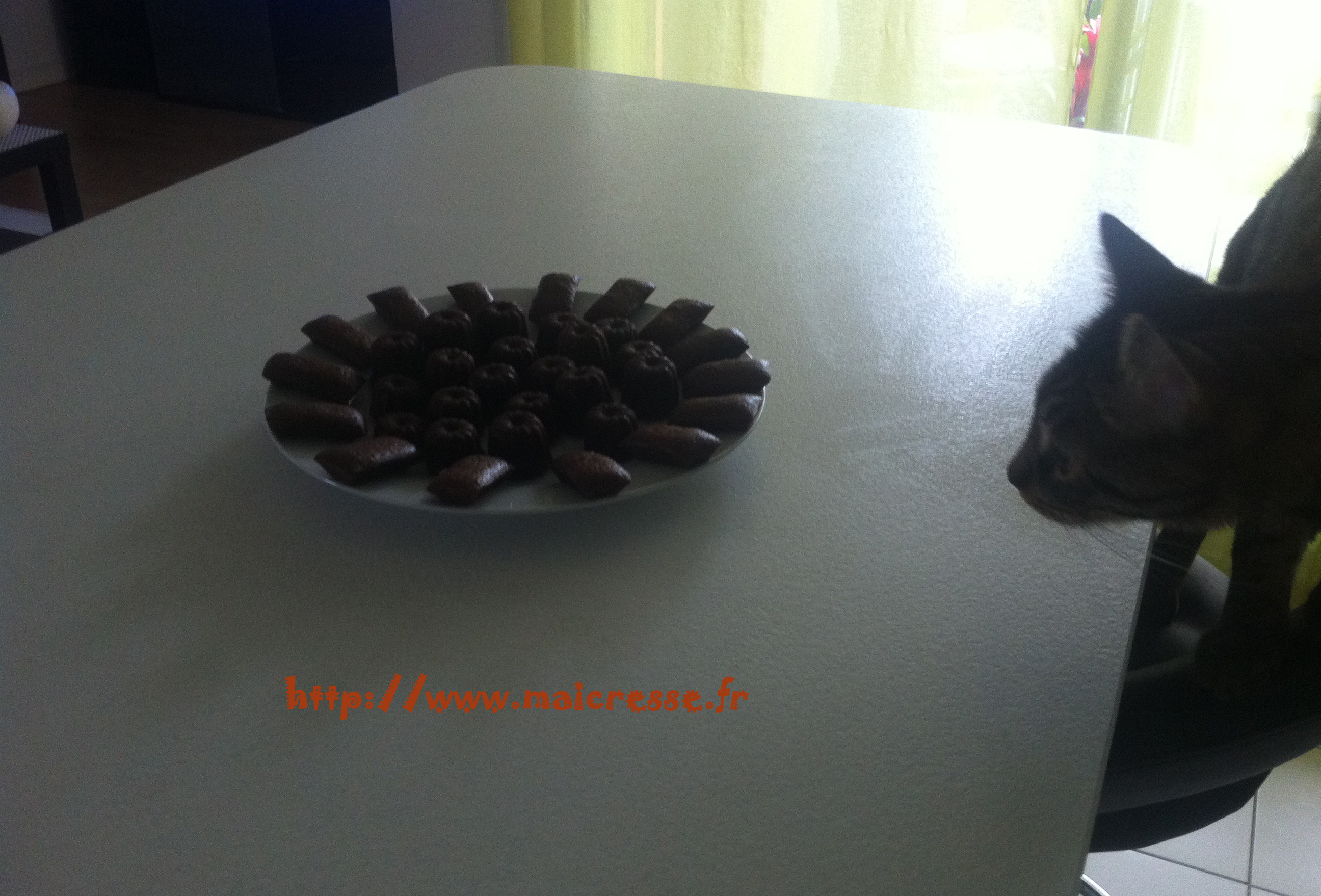chat-gourmand-cannele-financier