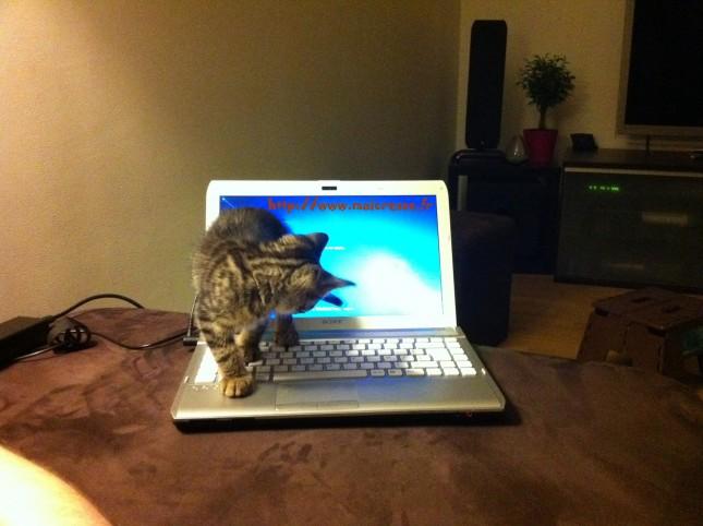 chaton-ordinateur
